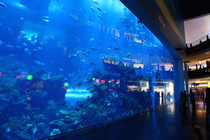 ドバイの世界最大の水槽