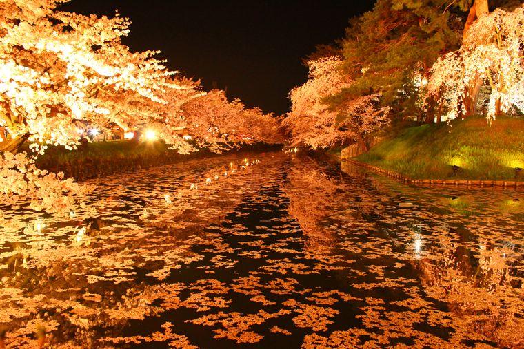 水面に映る夜の桜
