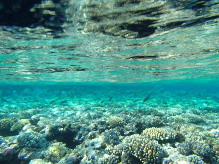 ダハブの海