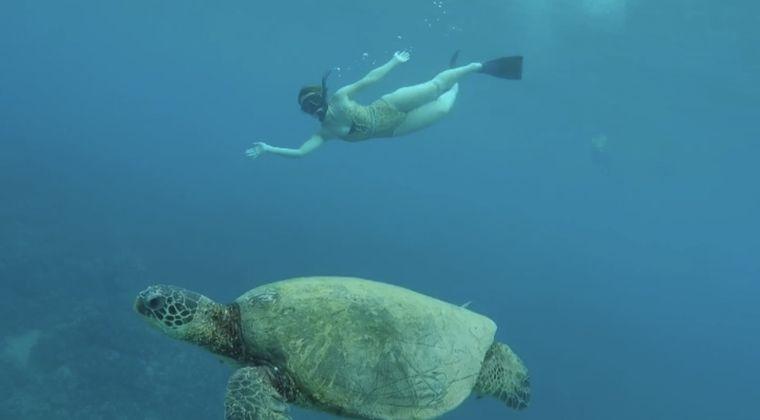 カメと泳ぐ女性