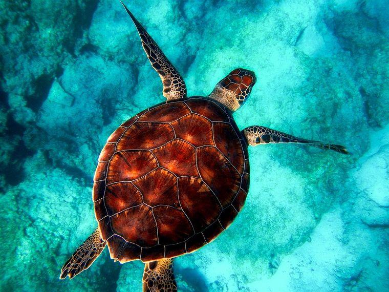 【グアム】ウミガメに会える体験ダイビング